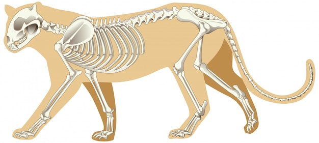 Outline drawing of leopard with skeletons Free Vector