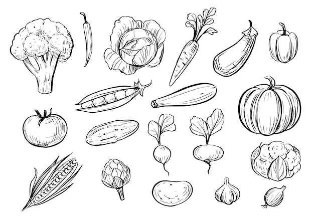 野菜の概要を説明します。落書きイラスト。 Premiumベクター