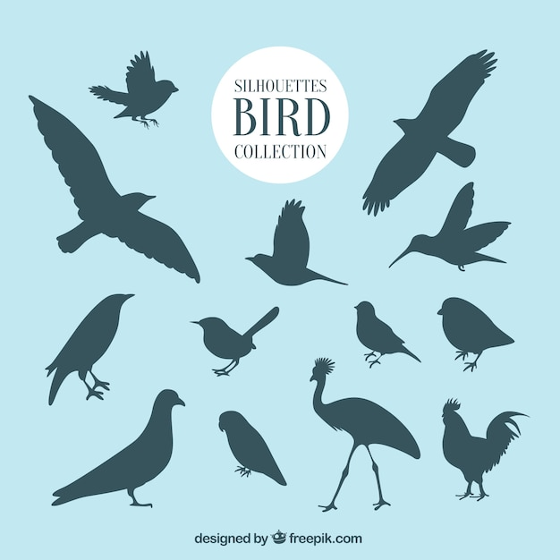 Outlines bird collection Vector Free Download