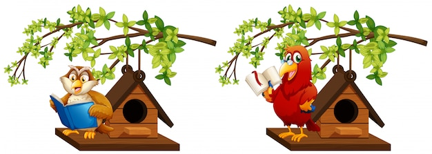Owl and parrot reading book in birdhouse Free Vector