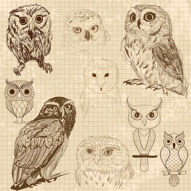 Owl sketches vector free download for Cartoon owl sketch