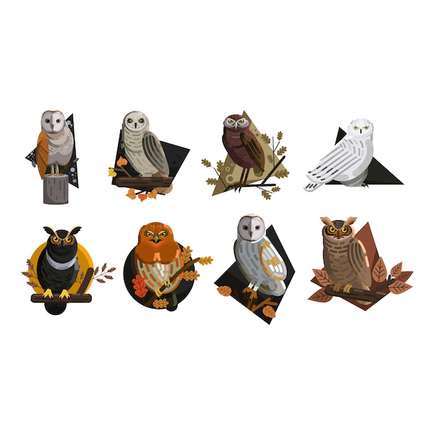Owl wild animals icons colored template vector Premium Vector
