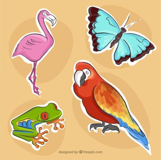 Confezione di uccelli e animali Vettore gratuito