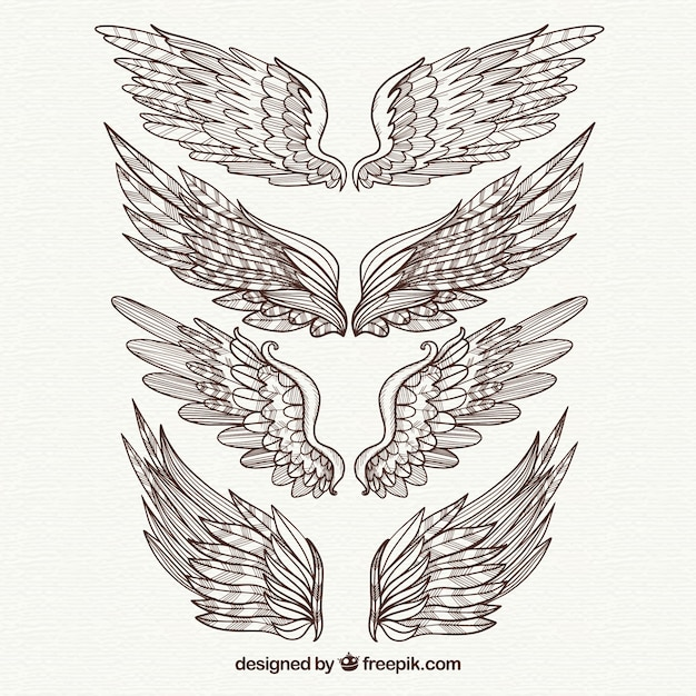 Pack of elegant hand drawn wings Free Vector