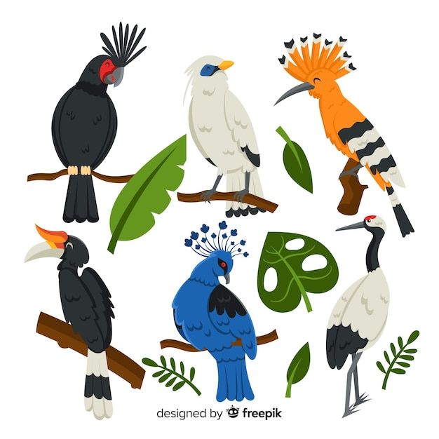 Pack of flat exotic birds Free Vector