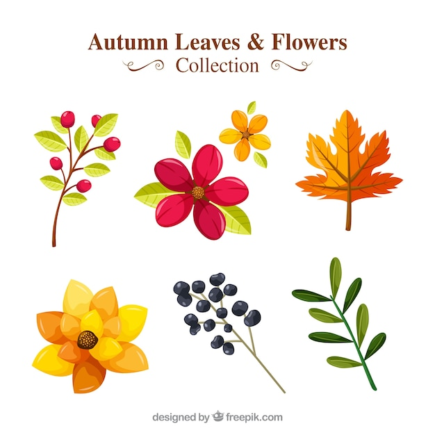 Pack Of Flowers And Autumn Plants Free Vector