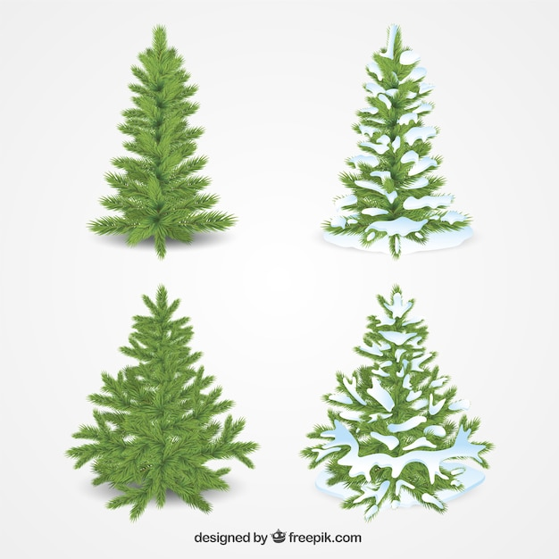 Pack of four realistic christmas trees Free Vector