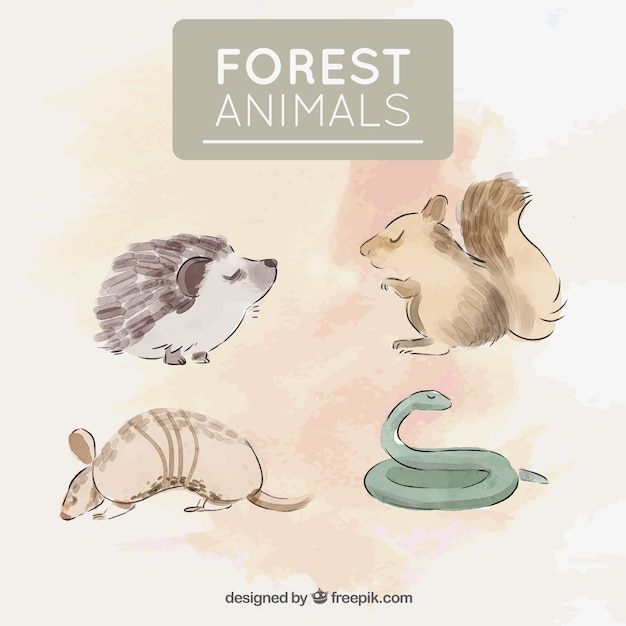 Pack of four wild animals painted with watercolors Free Vector