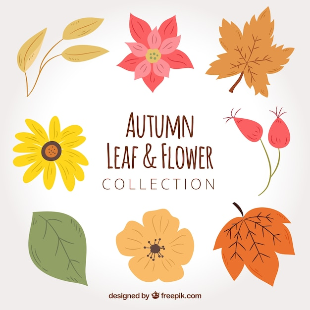 Pack of hand drawn flowers and dried leaves Free Vector