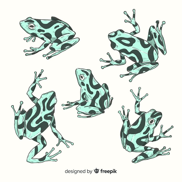 Pack of hand drawn frog Free Vector