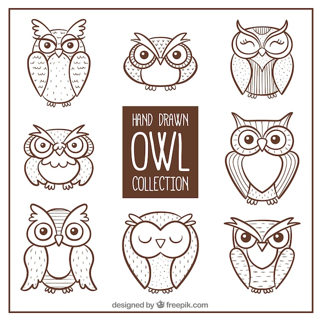 Pack of hand drawn owls Free Vector