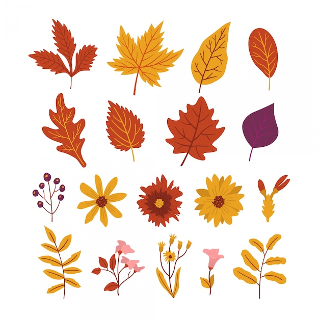 Pack of leaves and beautiful autumn flowers Premium Vector