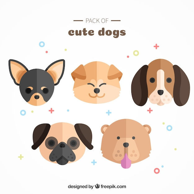 Pack of cute dogs