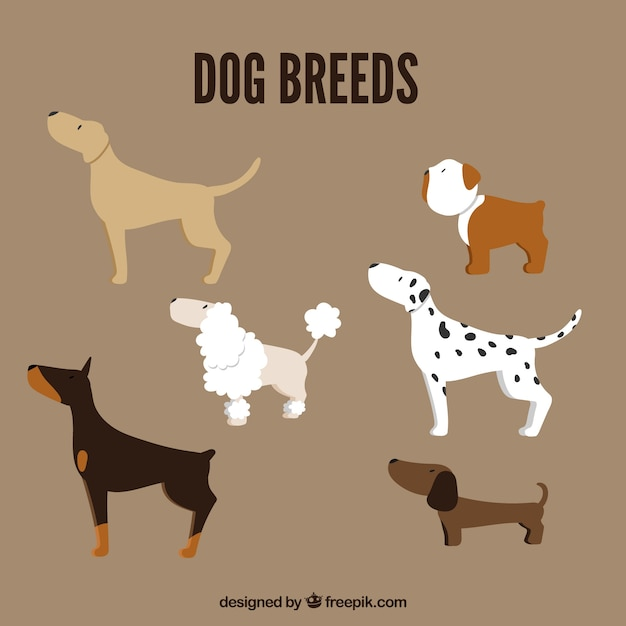 Pack of dog breeds