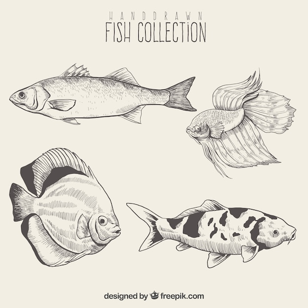 Pack of fish sketches Free Vector