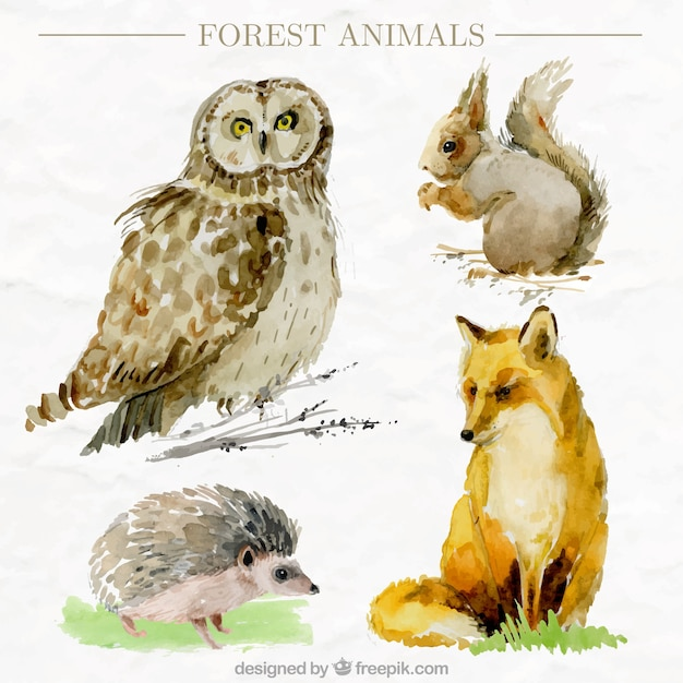 Pack of four watercolor forest animals in realistic style Free Vector