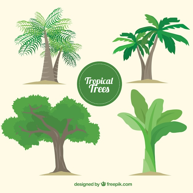 Palm Tree Vectors, Photos and PSD files | Free Download