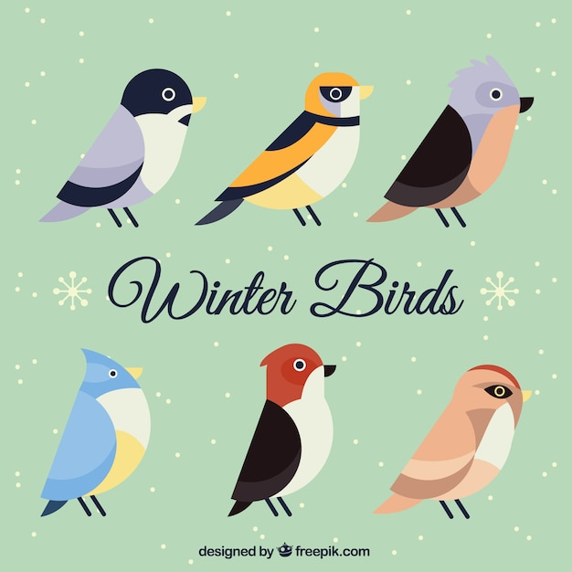 Pack of winter birds with different\ designs