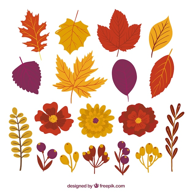 Pack of pretty autumn leaves and flowers Premium Vector