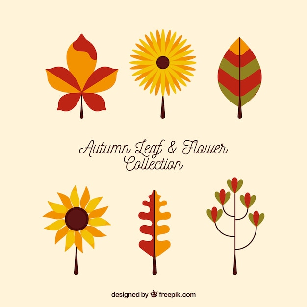 Pack of six flowers and leaves in flat design Free Vector