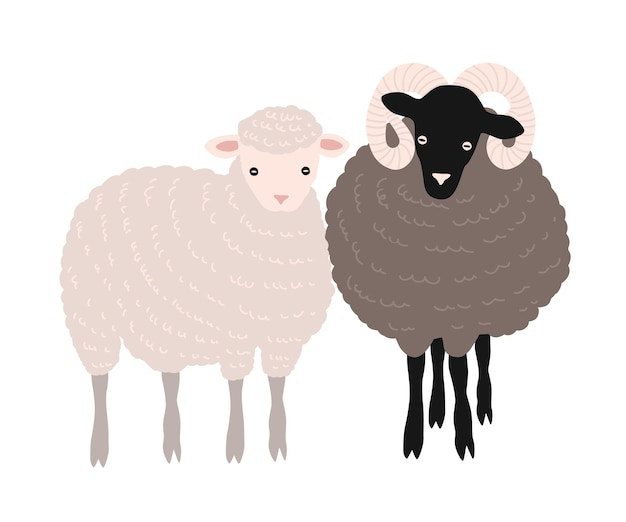 羊と羊が一緒に立っているペア。愛らしい納屋の家畜反芻動物または分離された農場の家畜 Premiumベクター