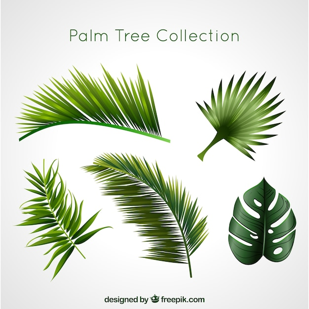 Palm tree collection Free Vector