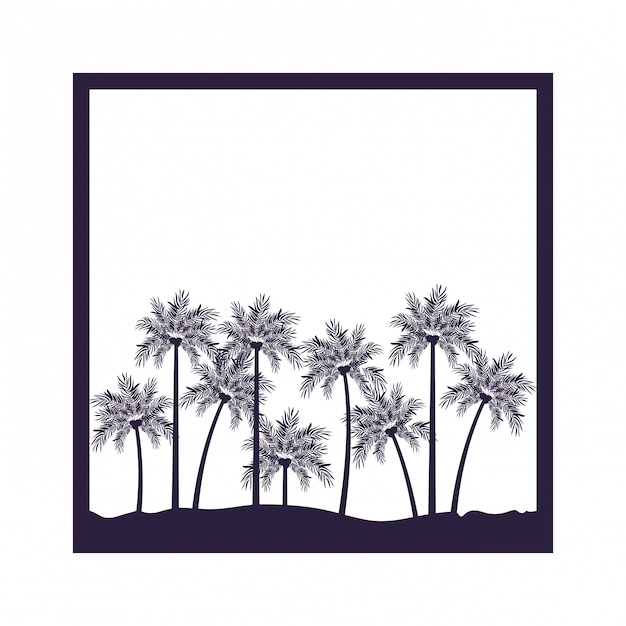 Palm tree with coconut in white background Premium Vector