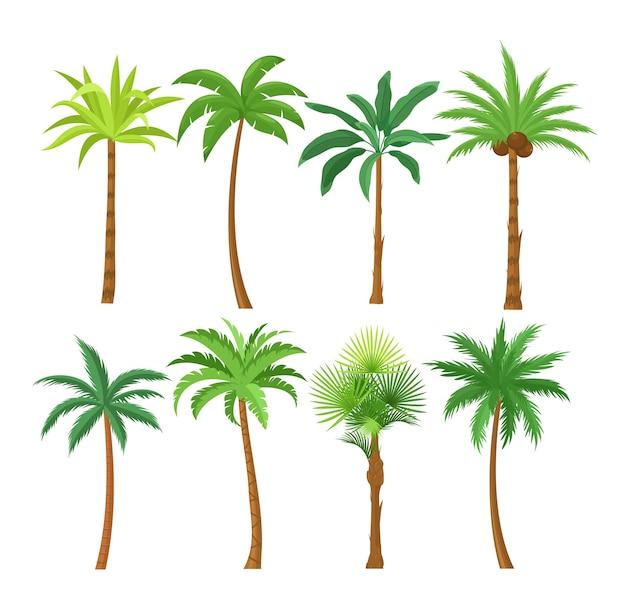 팜 나무 평면 그림을 설정합니다. 이국적인 해변 식물 격리 된 디자인 요소 팩. 프리미엄 벡터