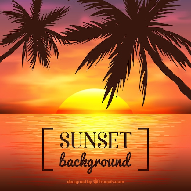 Palm trees with sunset background