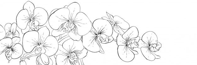 パノラマインク蘭花バナー。黒と白の線図 Premiumベクター