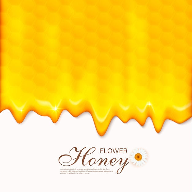 Paper cut style bee with honeycombs. template  for beekeeping and honey product. Premium Vector