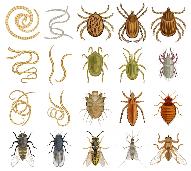寄生虫漫画は、アイコンを設定します。白い背景の上の図の昆虫。孤立した漫画は、アイコンの寄生虫を設定します。 Premiumベクター