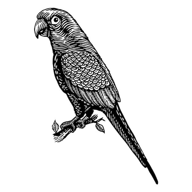 オウム鳥彫刻イラスト Premiumベクター