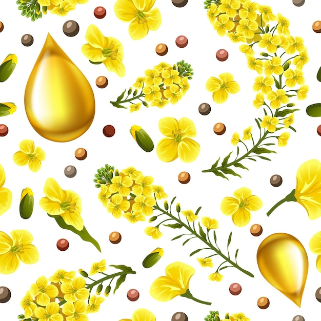 Modello fiori di colza, colza. brassica napus. Vettore gratuito