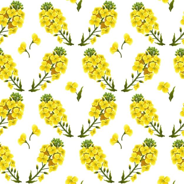 Pattern rape flowers, canola. brassica napus Free Vector