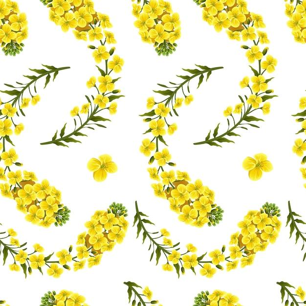 パターン菜の花、カノーラ。セイヨウアブラナ。 無料ベクター
