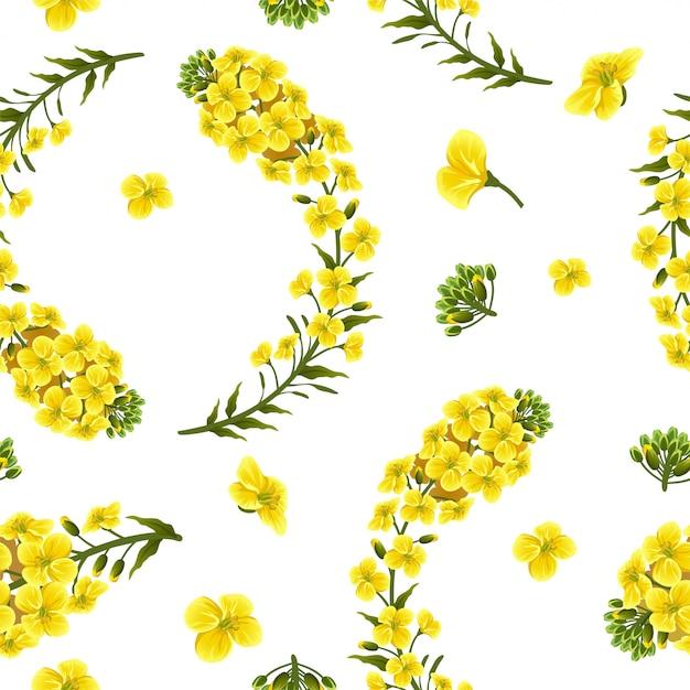 패턴 유채 꽃과 잎, 카놀라. 프리미엄 벡터
