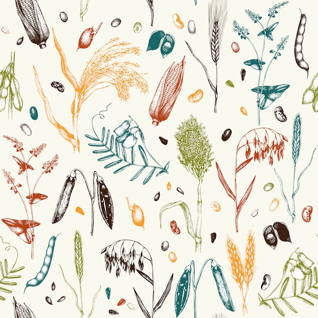 Узор с рисованной зерновых культур и бобовых растений в цвете Premium векторы