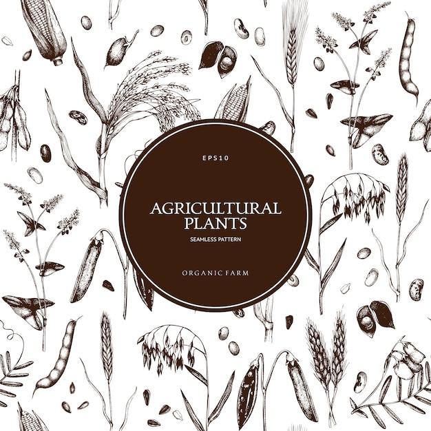 Фон с рисованной зерновых культур и бобовых растений. Premium векторы