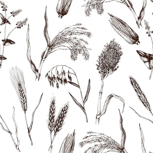 Фон с рисованной зерновых культур. ботанический фон. Premium векторы