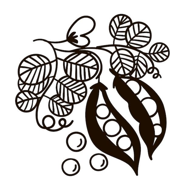 エンドウ豆の枝白黒イラスト Premiumベクター