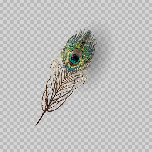 Peacock feather on transparent background. Premium Vector