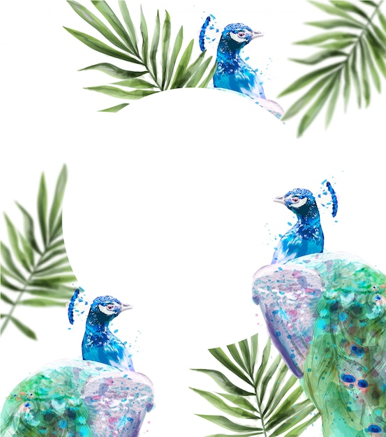 Peacock tropic background watercolor. summer exotic card Premium Vector