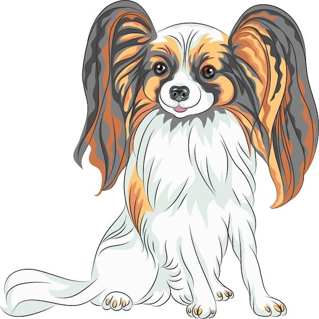 Pedigreed dog papillon breed Premium Vector