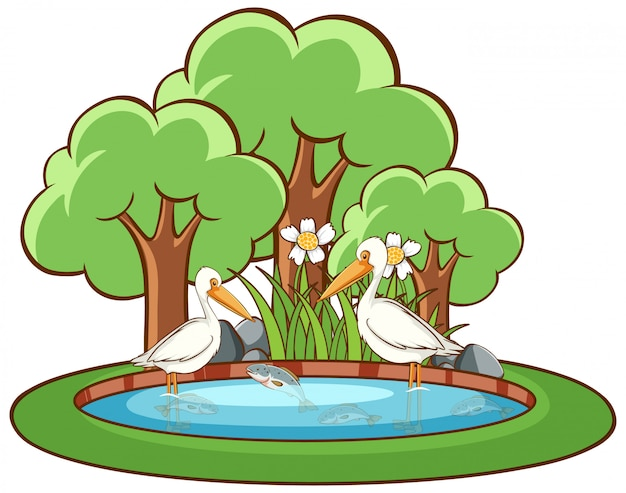 Pelican birds on white background Free Vector