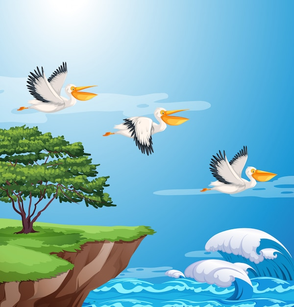 Pelican flying on sky Free Vector