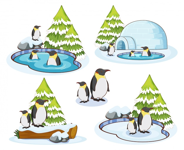 Penguins in snow winter Free Vector