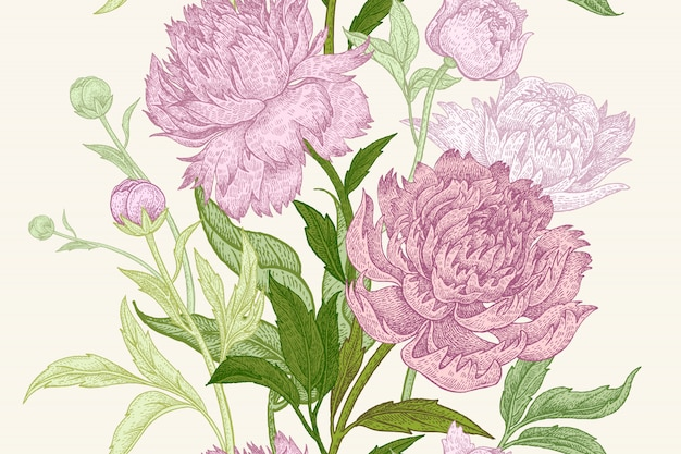 Peony flowers illustration Premium Vector