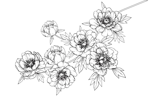 Flowers Vector Drawing Png: Peony Julia Rose Leaf And Flower Drawings. Vintage Hand