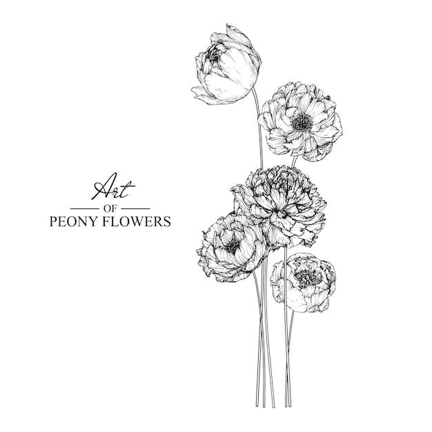 Пион-лист и цветочные рисунки. винтаж рисованной ботанические иллюстрации. Premium векторы